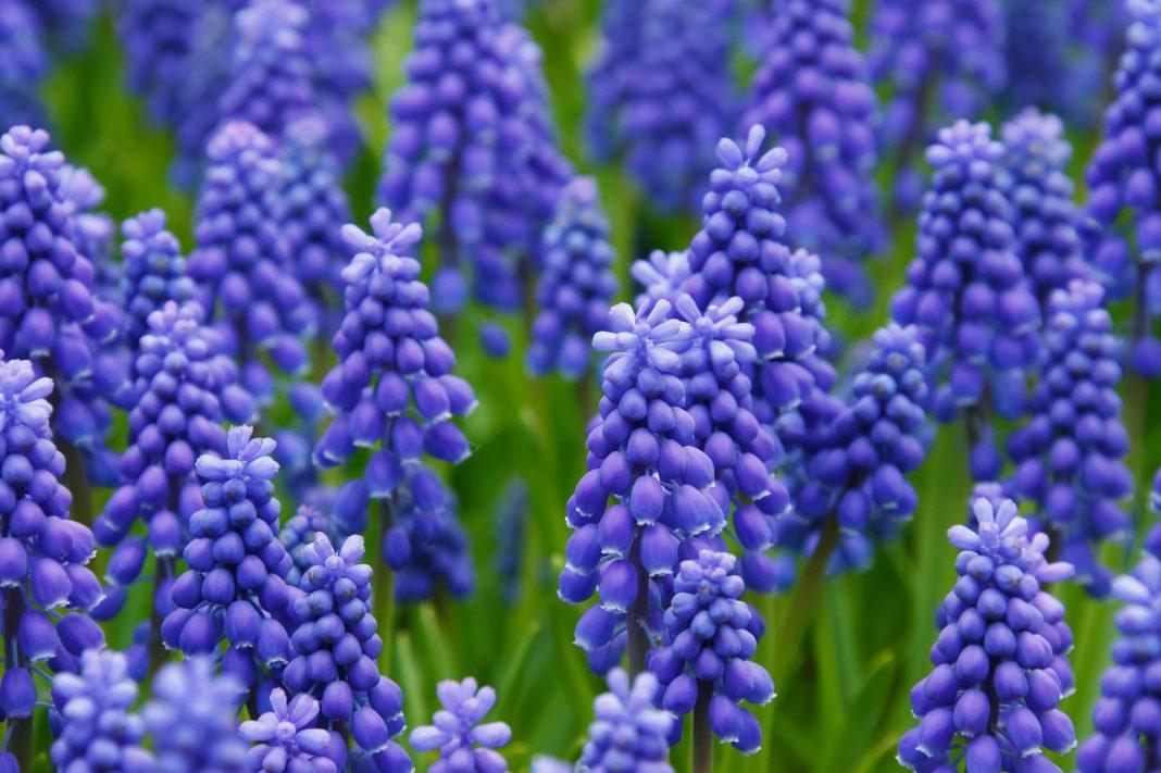 hyacinth bangay story